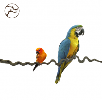 Liana Snakewood Bird 100 cm