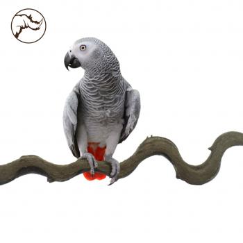 Liana Snakewood Bird 200 cm