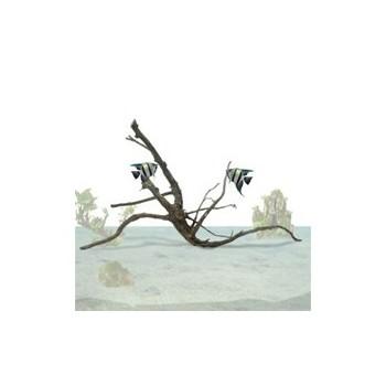 Tiblunt Roots