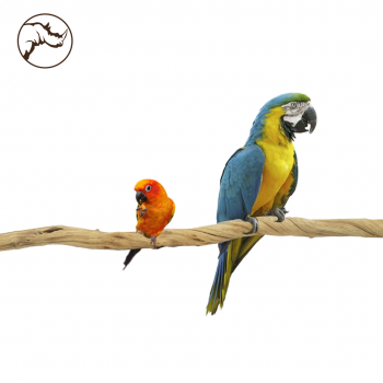 Liana Sumbawa Bird 100 cm