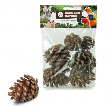 Forest Pine Cones 6pc.
